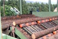 Centre de sortare lemn - CSPL